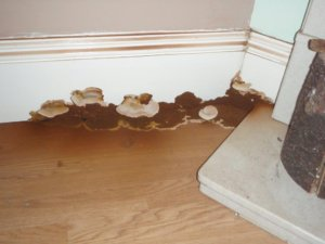 Noblesville, IN | Dry Rot | Everdry Indiana